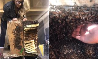 Watch This Brave Beekeeper Rescue Bees With Bare Hands
