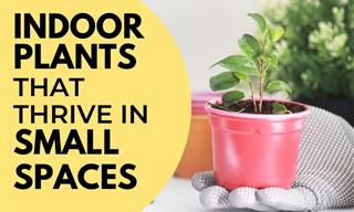 10 Indoor Plants That Thrive in Small Spaces