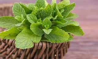 10 Healthy Herbs You Can Get at Home