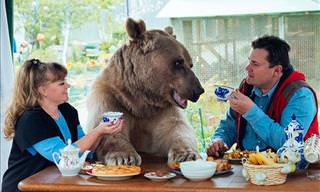 Who Would've Thought that a Bear Could Be a Loving Pet?