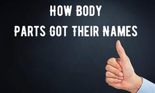 Here's How These 10 Common Body Parts Got Their Names