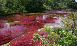 The Five Color River.