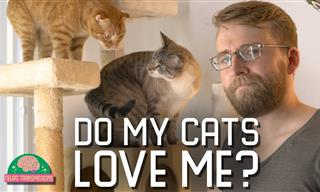 Do Our Cats Love Us? A Fascinating Experiment