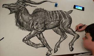 Stunning Animal Drawings from Memory