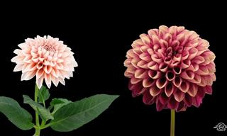 A Flower Timelapse to Make Your Soul Bloom With Joy!