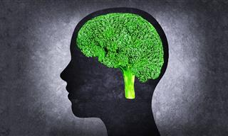 10 Best Foods to  Increase Your Brain Power and Memory
