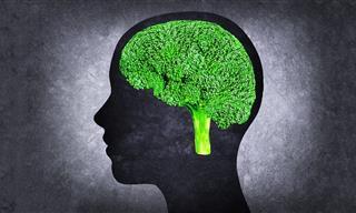 10 Foods Good for Increasing Brain Power