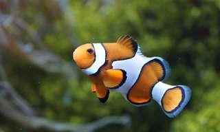 12 Stunning Ocean Dwellers