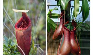 8 Exotic Plants You Won't Believe Exist