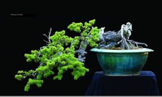 12 Stunning Bonsai Trees to Feast Your Eyes Upon