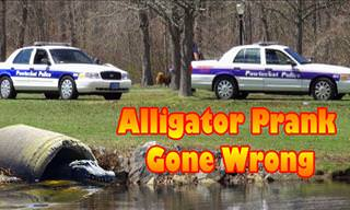 The Remote-Controlled Alligator Prank
