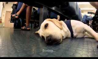 A Day in the Life of a Seeing Eye Dog!