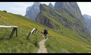 The Alps of Austria & Italy Buzz with Nature and Culture