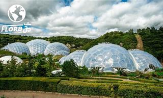 Welcome To the World's Largest Indoor Rainforest