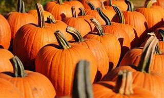 Pumpkins Are a Lot Healthier Than You Thought