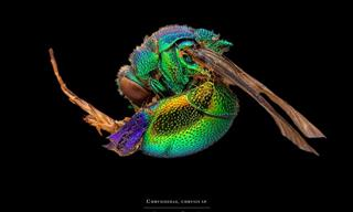 Beautiful Insect Macro Photography From Francesco Bagnato
