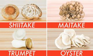 The Vast World of Edible Mushrooms