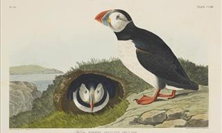 Here Are Some Delightful Works of the Artist John J. Audubon