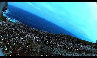 A Bird of Prey Takes Photos of Penguins - Wow!
