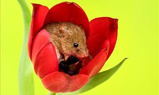 20 Cute Little Harvest Mice
