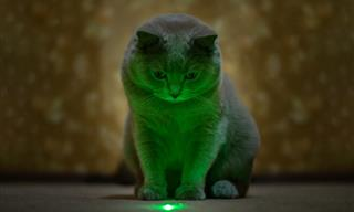 Is It a Good Idea to Use a Laser to Play With Your Pets?