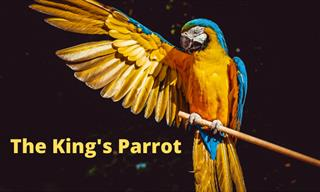 Parable of the King's Parrot