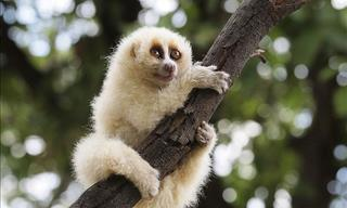 15 Species in the Primate Family That Will Astound You