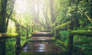 Surround Yourself With the Forest Sounds of the World
