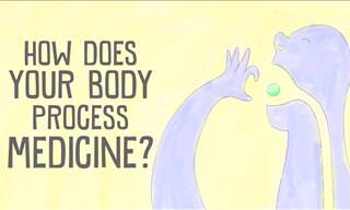 This is How the Body Processes Medicine