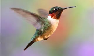 A Man Nurses a Hummingbird Back to Health