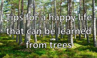 10 Tips from Trees on Living a Happy Life