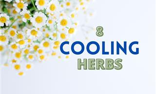 Try These 8 Naturally Cooling Herbs This Summer