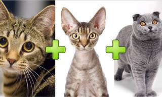 Cute Cross Breed Cats Will Stun You!