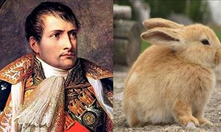 Napoleon and the Rabbit Hunt