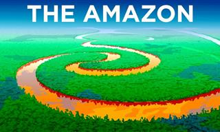 The Incredible Secrets of the Amazon Rainforest...