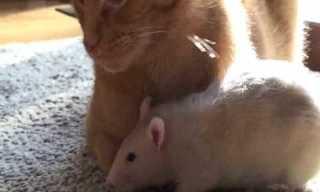 Tom and Jerry Finally Make Peace