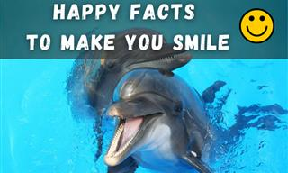 These Uplifting Facts Will Bring Some Cheer to Your Day