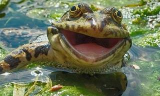25 Smiling Animals to Pick Up Your Mood