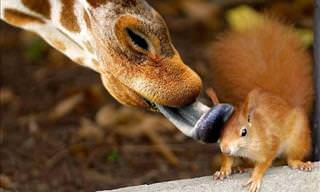 I Can't Stop Laughing at These Hilarious Wild Animals!