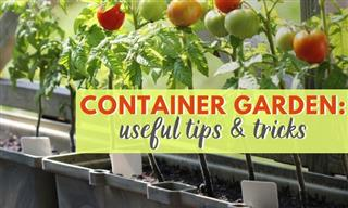 10 Tips For a Thriving Container Garden