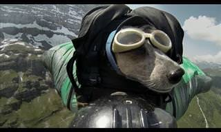 Whisper the BASE-Jumping Dog