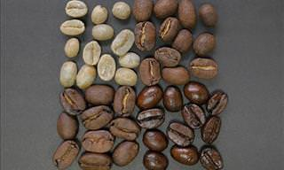 Is Light Roast Coffee Healthier Than Dark Roasts?