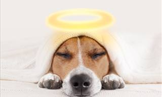 Joke: Three Animals Go to Heaven