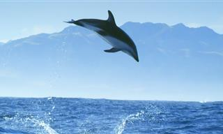 The Magical Dolphin Moments Will Keep You Amazed