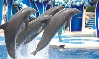 "The ""Blue Horizons"" Dolphin Show - Incredible!"