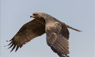 Take Flight Among these Beautiful, Graceful Birds