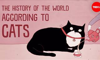 The History of Human Civilization from Cats' Point of View
