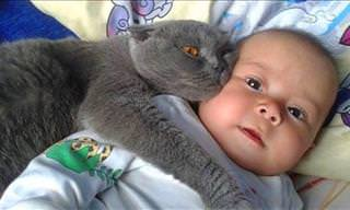 When Cats Play Bodyguards to Little Humans...