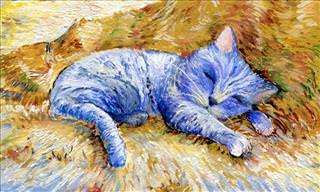 Veselka Velinova's Arty Feline Dozen