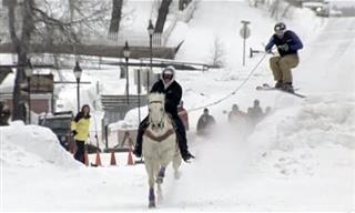 Skijoring: Where You Get Pulled By Horses in the Snow